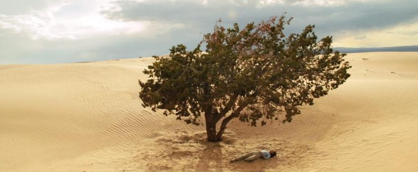Melanie Wanda Third Trailer Tree